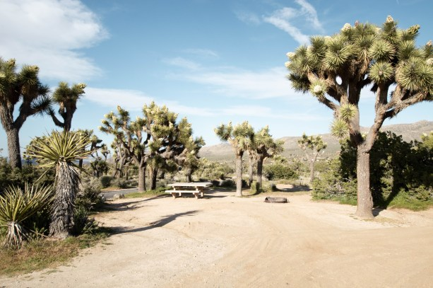Black Rock Campground - Joshua Tree