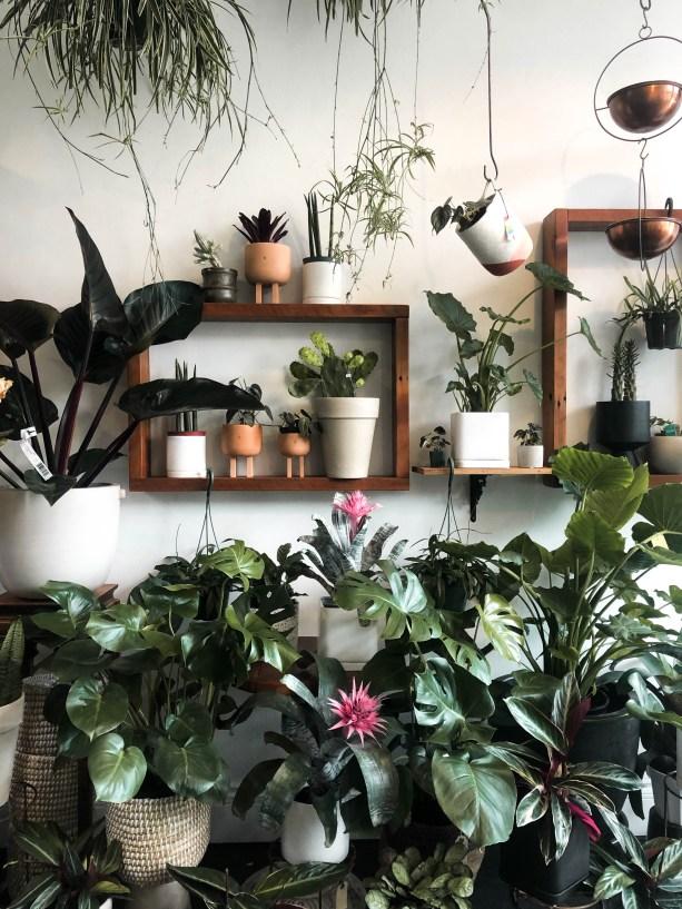 Plant shop in Portland