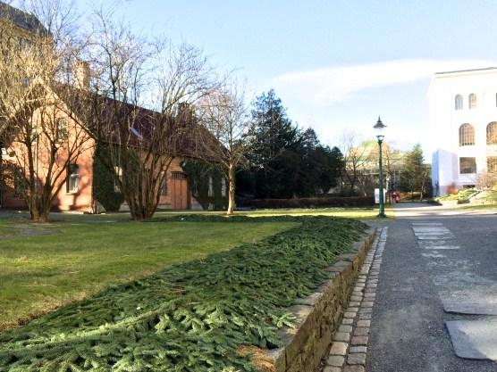 Muséhagen, baksiden av museet