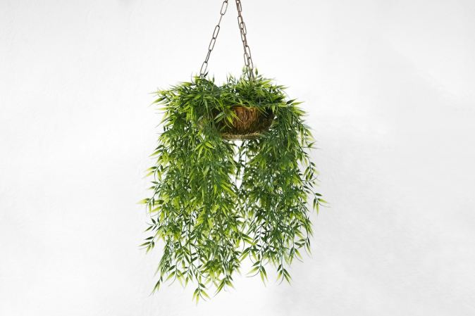 image of plant hanging from ceiling