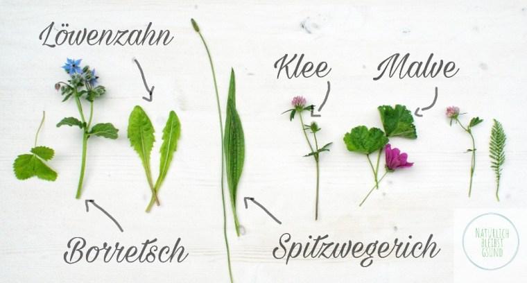 HeilpflanzenErkennen+Logo