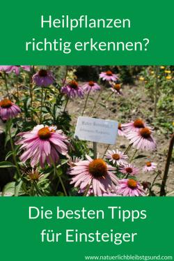 Heilpflanzensichererkennen (5)