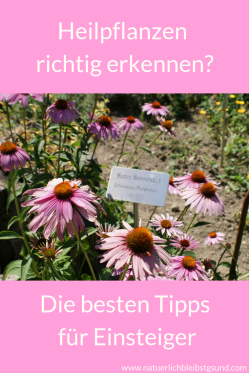 Heilpflanzensichererkennen (6)