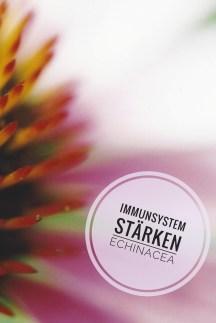 EchinaceaPurpurea-01-03