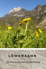 Löwenzahn3