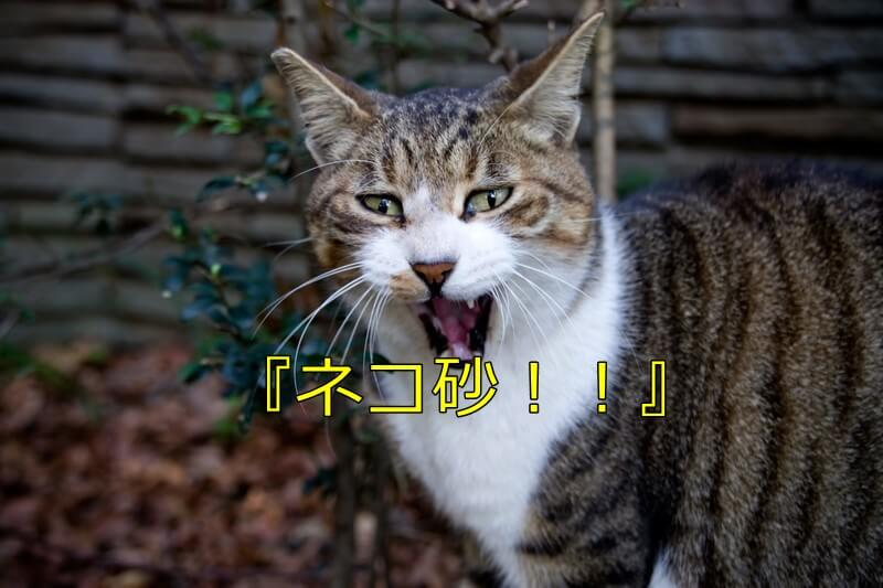 叫ぶような顔の猫