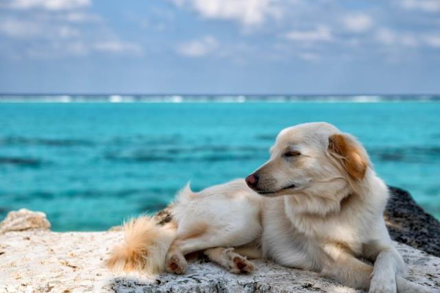 青い海と優しそうな犬