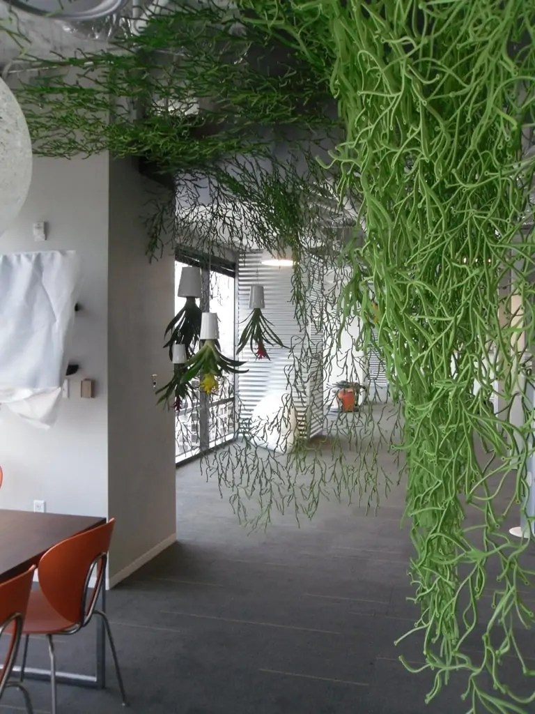 Smiley Media Natura Enhancing The Built Environment Indoor Office Plants Outdoor