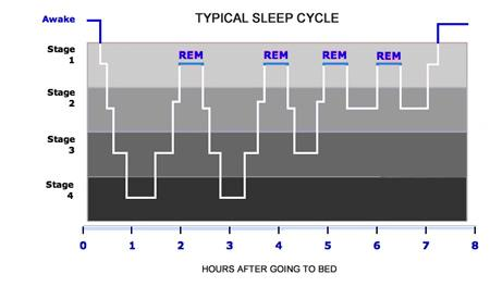 Typical 8-hour Sleep Cycle
