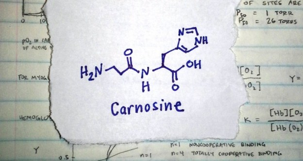 Carnosine and ADHD