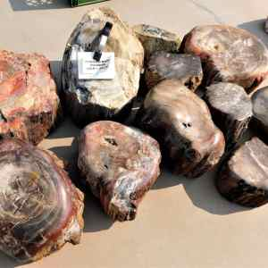 Shop Petrified Wood