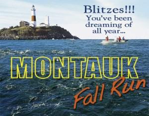 Montauk Fall Run Fishing for Striper Albies