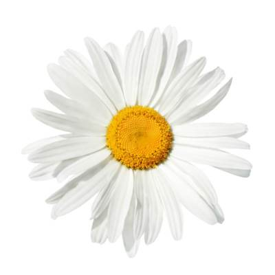 Ingredients For Your Natural Beauty Wishlist: Organic German Chamomile Hydrosol