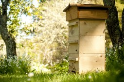 Warre hive sited for morning sun and afternoon shade