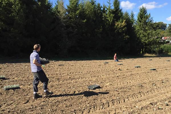 Lavender Field Planting