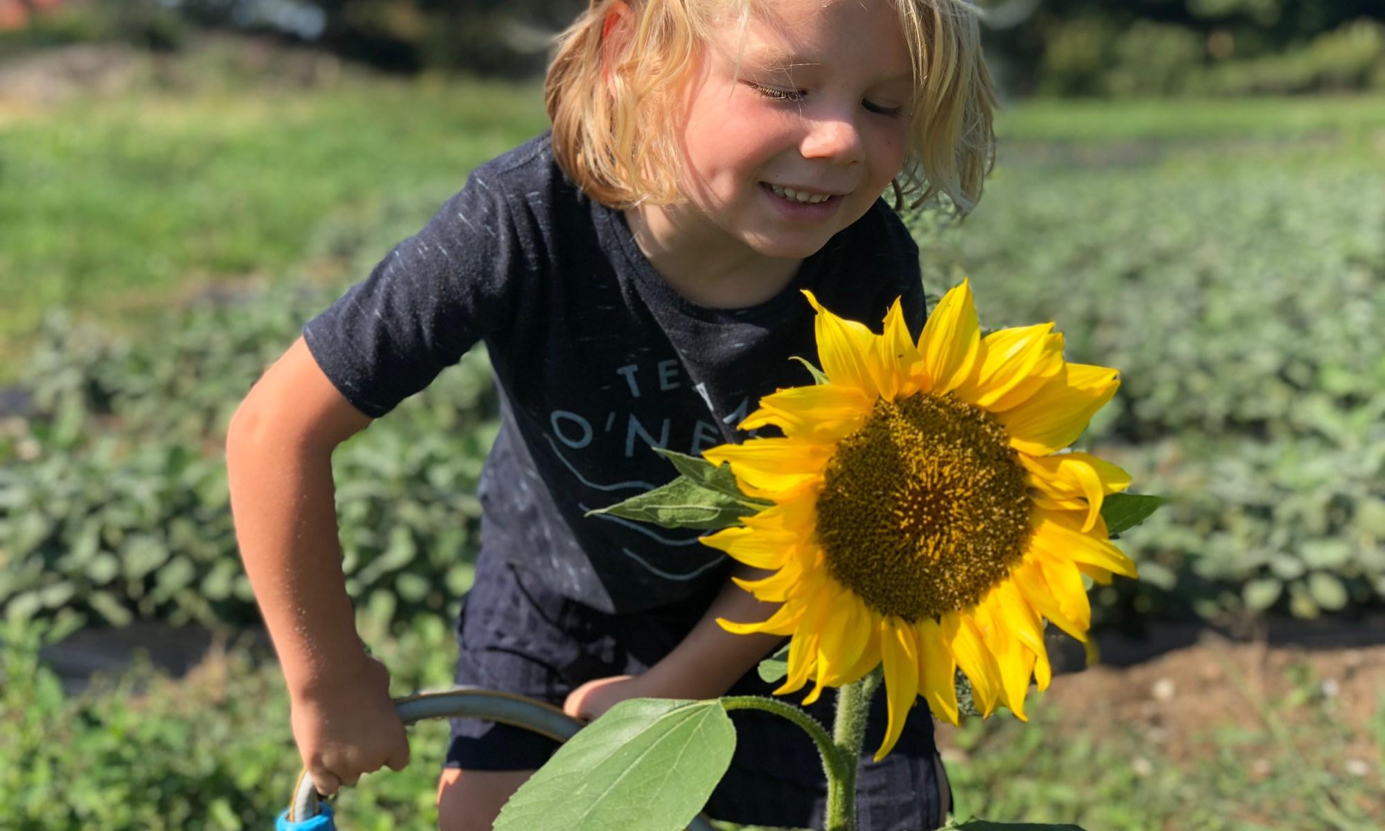 Josef and the sunflower, Telegraph Track Wallington Naturallythinking