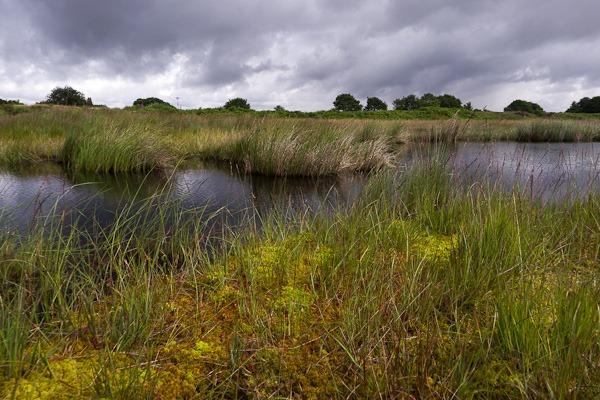 Highfield Moss