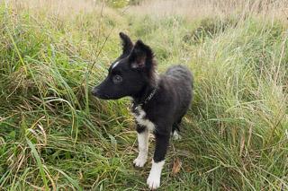 Meghan - 3 months old