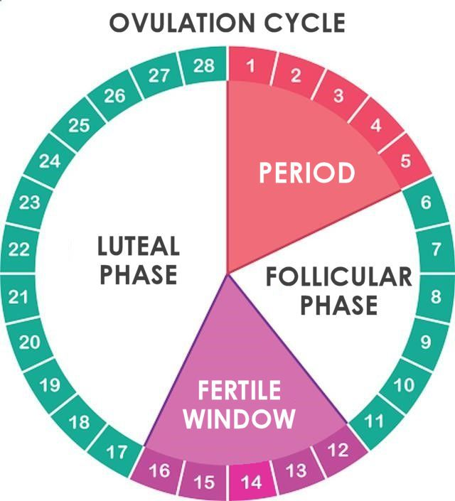 How To Know Your Fertile Days Naturally  Precisely 2019 -6339