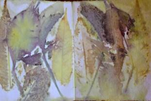 Parthenocissus,Sumach, Prunus