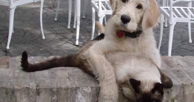aloe vera para mascotas