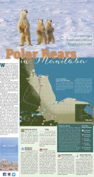 Cover of CPAWS - Manitoba Chapter