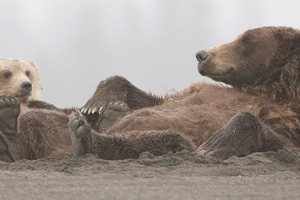 Photo for 2019 Alaska Brown Bear Photography Tour I