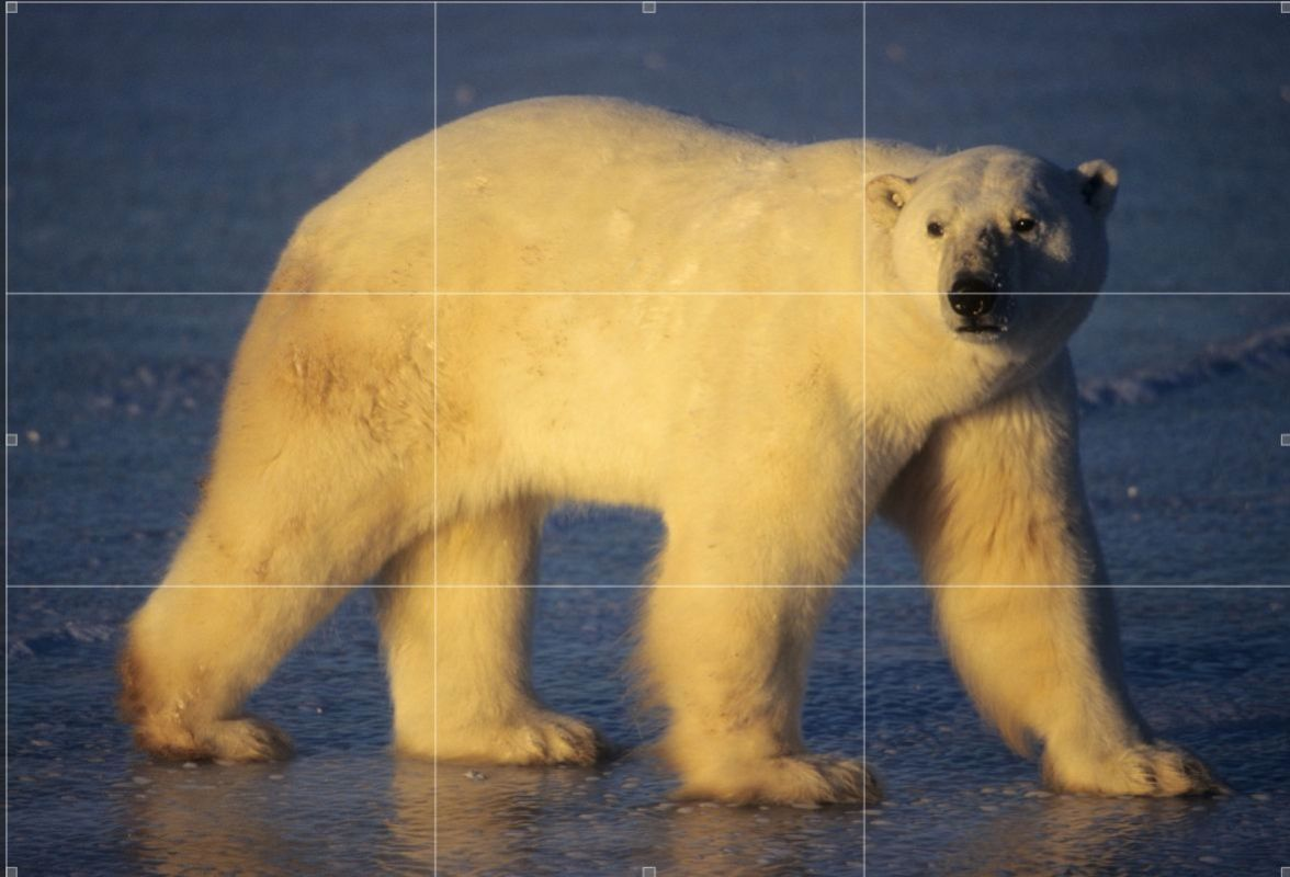 Example of the Rule of thirds on a subject filling the frame. Notice the head and eyes of the bear are in the upper right quadrant of the rule of Thirds.