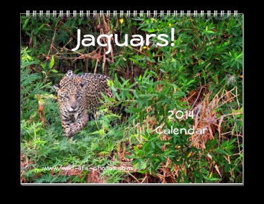 Jeff Nadler's 2014 calendar featuring jaguars from the Pantanal, Brazil.