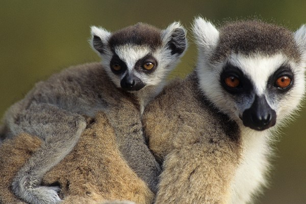 Photo for 2017 Ultimate Madagascar Photography Tour II