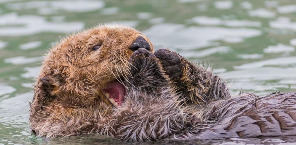 Alaska Bears - 15.jpg