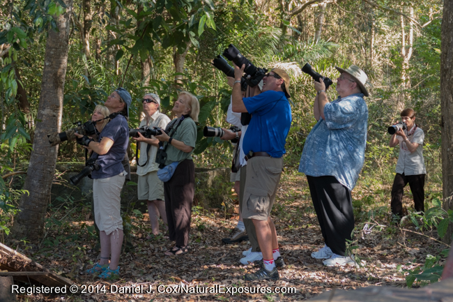 Our group points their cameras to the trees where a group of habituated Black-taild Marmosets come down to feed on bananas. Lumix ZF1000