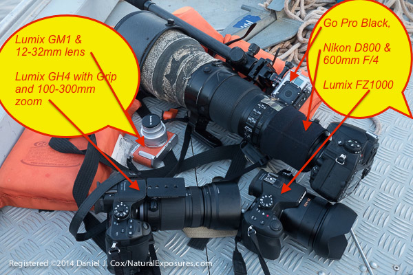 Tools of the multi-media trade. Nikon D800 & 600mm F/4, GoPro Black Edition, Lumix GH4 & 100-300mm, Lumix GM1 & 12-32mm, Lumix LZ 1000 with 25-400mm