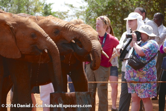 NE Explorers Sue, Alison and Lynn enjoy the up close and personal view of the orphaned elephants at the The David Sheldrick Wildlife Trust elephant orphanage near Nairobi, Kenya