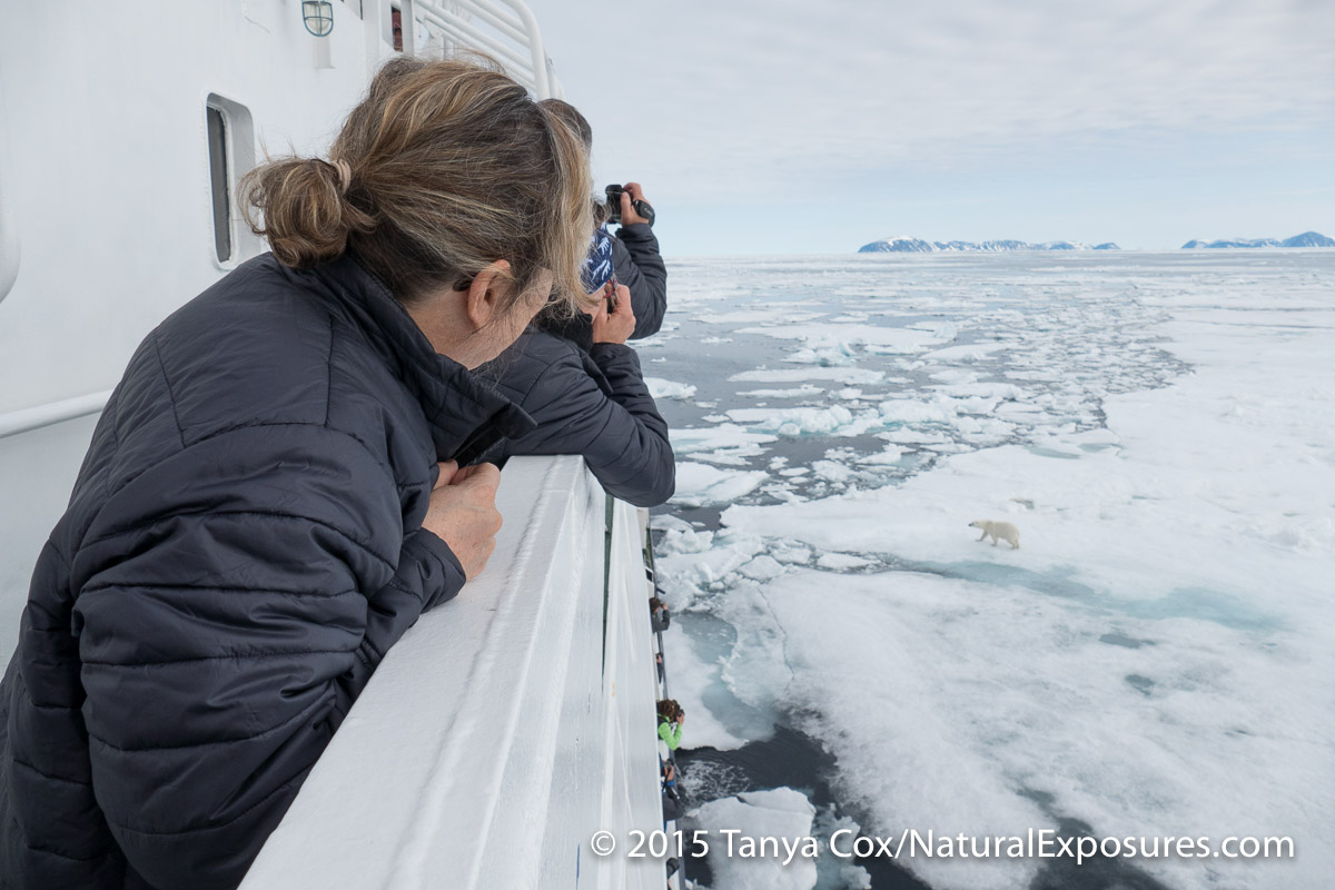 Our ship gets in to the ice for polar bears. Svalbard, Norway.