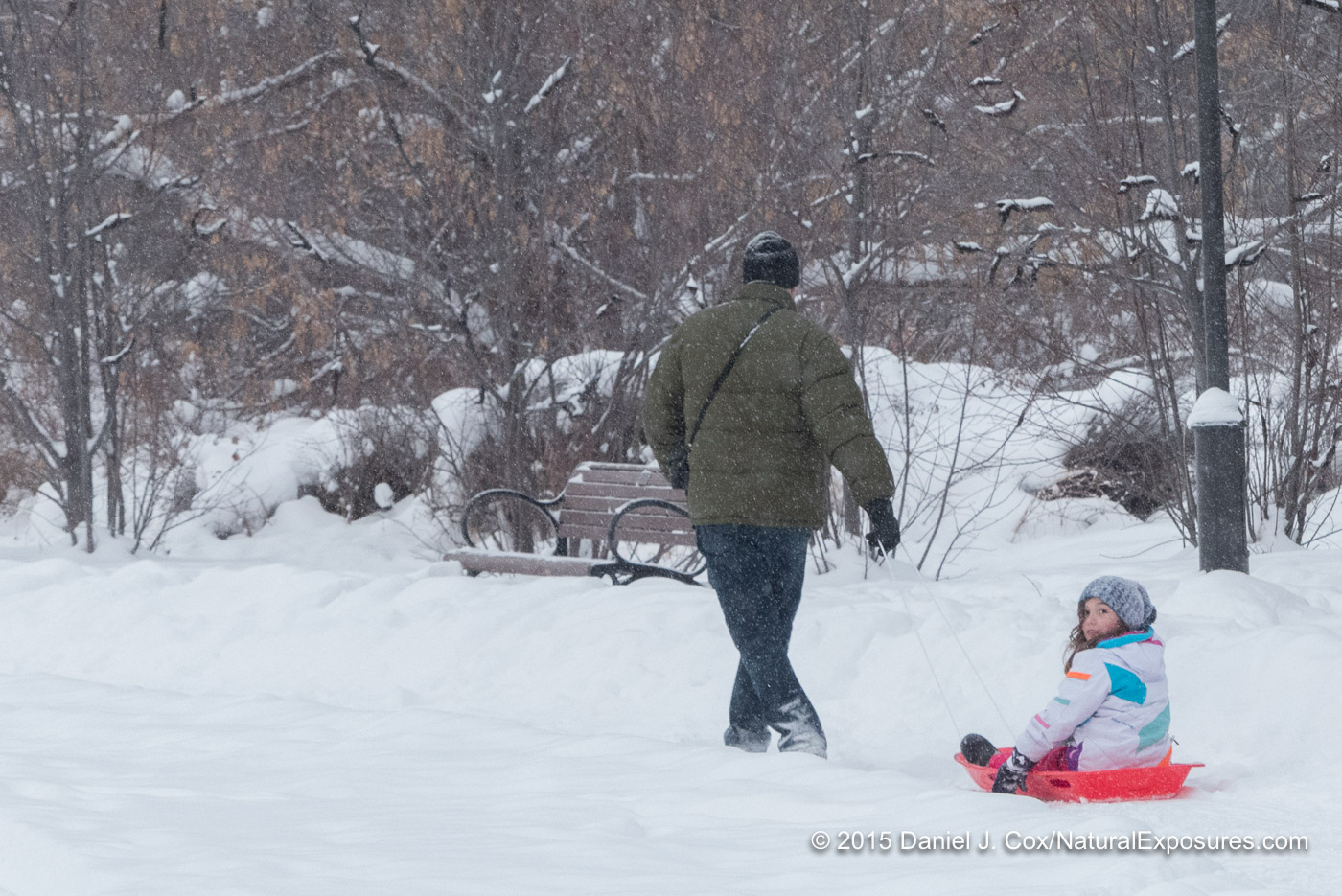 Terry pulling Isabella on a sled through Lindley Park, Bozeman, Montana