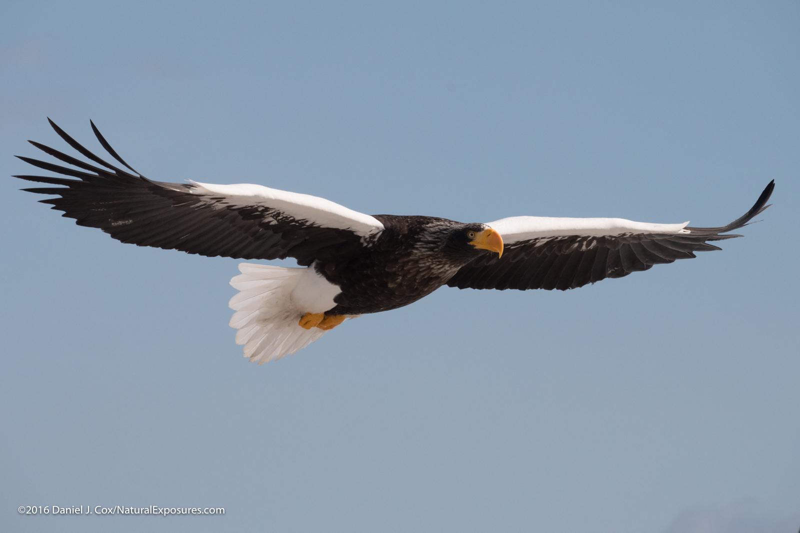 Birds in Flight Settings for Lumix Cameras, Leica 100-400mm, Lumix