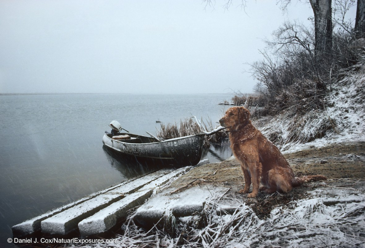 Brandy, the families golden retriever sitting on the banks of the Missouri River after a duck hunt in South Dakota. We had a very unproductive hunt and I named this print Empty Skies as Brandy looked out over the river hoping for a change in luck.