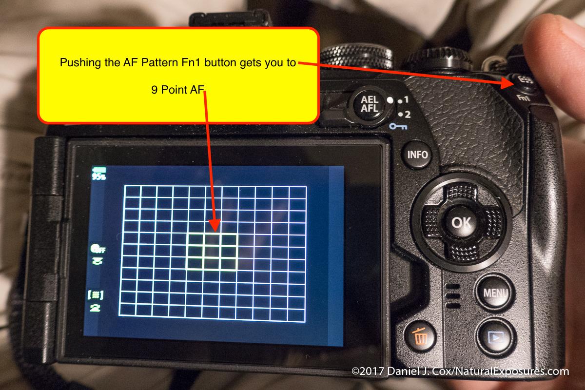 AF pattern on rear LCD
