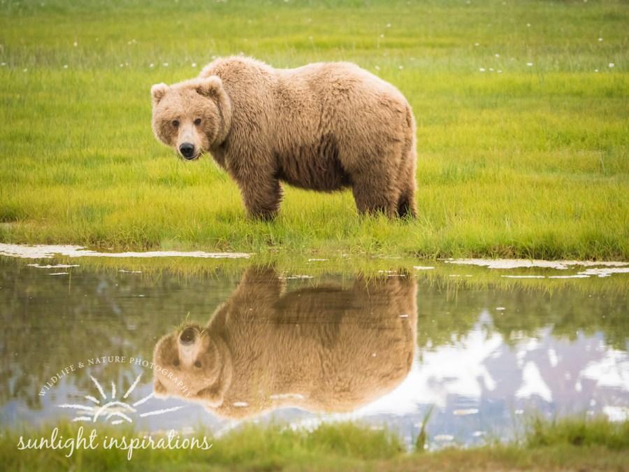 Christine Crosby brown bear image