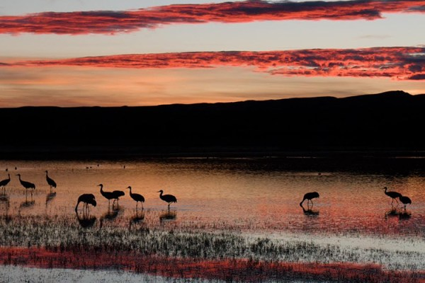 Photo for 2019 Bosque del Apache Bird and White Sands Photography Tour