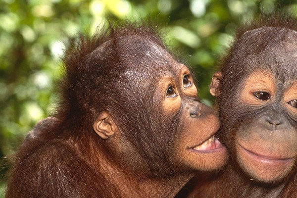 Photo for 2022 Orangutans, Dragons, and Temples Photography Tour I
