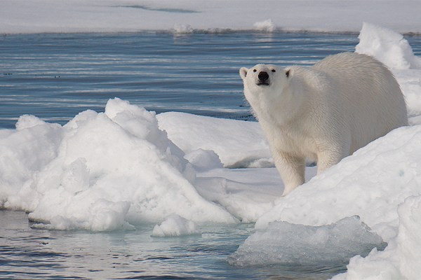 Photo for 2022 Svalbard Photography Tour