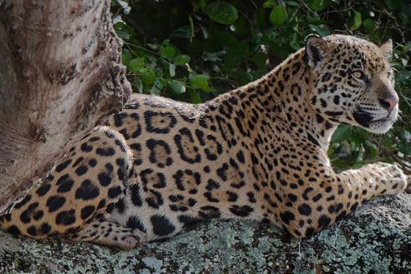 Photo for 2020 Brazil Pantanal Jaguar Wildlife Photo Expedition II