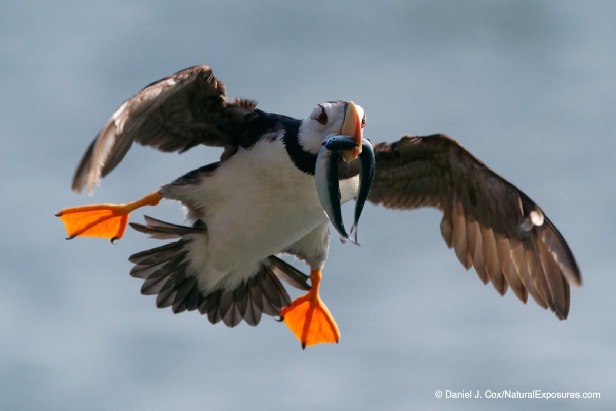 Flying bird, birds in flight,