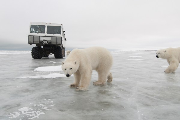 Photo for 2021 Churchill Polar Bear Tour II