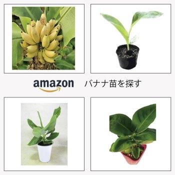 バナナの苗を探す