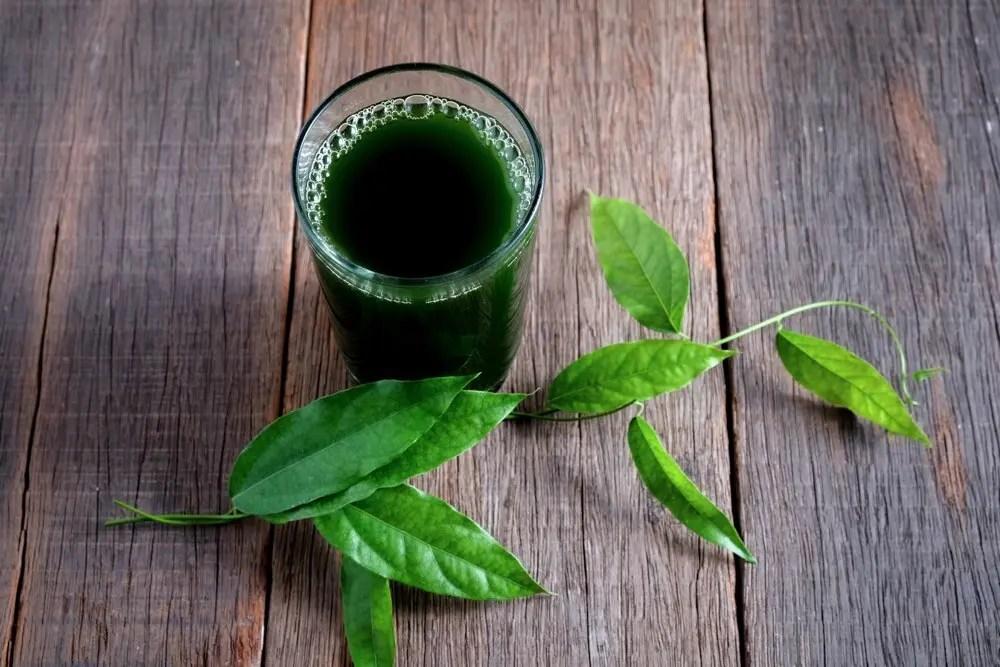 13 Amazing Benefits of Chlorophyll