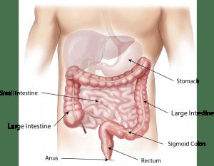 Promotes Digestion