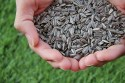 Best foods for eczema: Image of sunflower seeds in someone's hands.